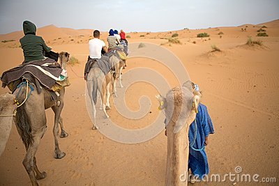 Travellers on the camels Editorial Photo
