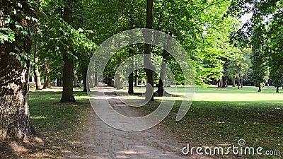 Traverser une allée verte de hauts arbres dans un parc public banque de vidéos