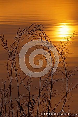 Trawa słońca