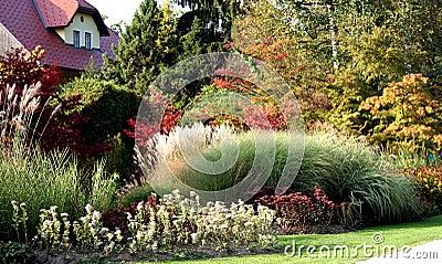 Trawy perennial