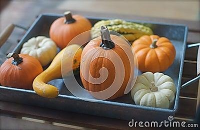 Tray full of Decorative Pumpkins