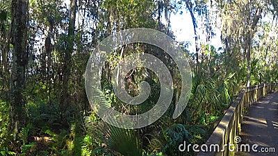 Trayectoria de HDR a través de John Chestnut Park en la Florida metrajes