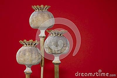 Tre capsule del seme di papavero in primo piano, isolato sull arancia