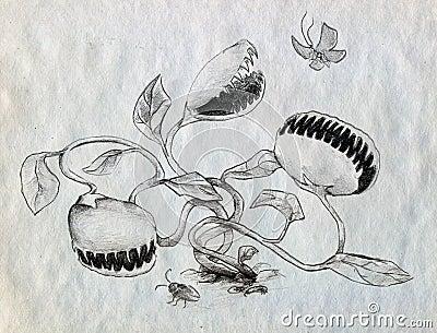 Carnivorous jaga för växter