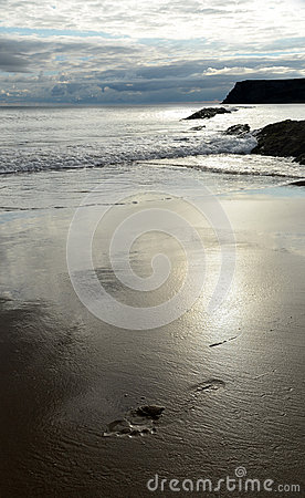 Free Tread In The Sand Stock Photography - 44427112