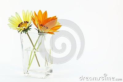 Treasure flower in a glass vase