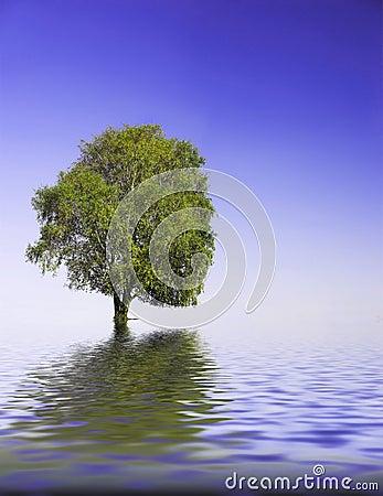Free Tree Stock Photography - 1568302