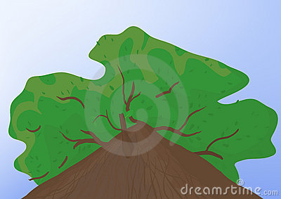 Tree Stock Photos - Image: 20357603