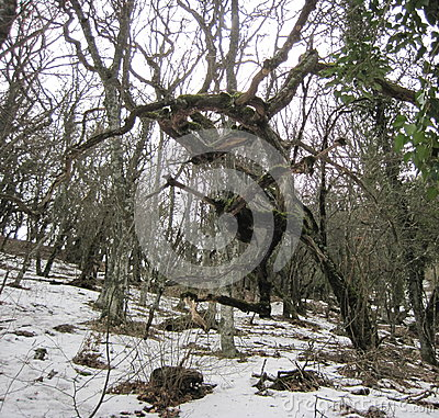Free Tree Stock Image - 50523721