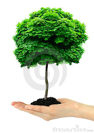 Free Tree Stock Image - 5315721