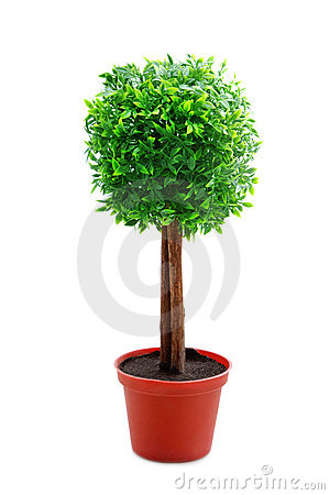 Free Tree Royalty Free Stock Photography - 6633827