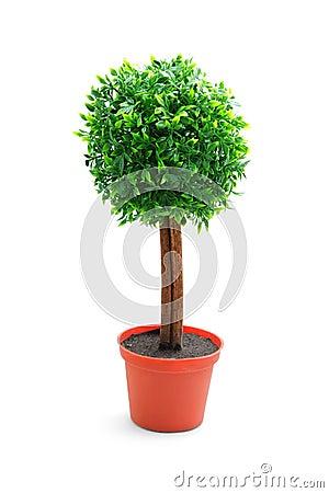 Free Tree Stock Photography - 7455482