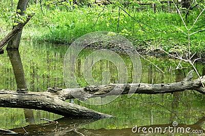 Tree across Water