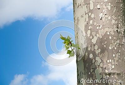 Tree against blue sky