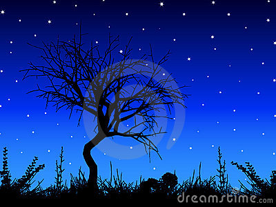 Tree against starry sky