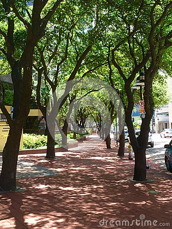 Free Tree Alley Royalty Free Stock Photography - 54094837