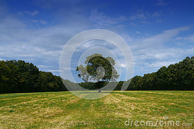 Tree alone in field