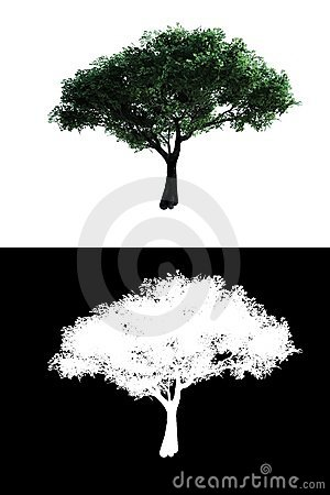 Tree with alpha
