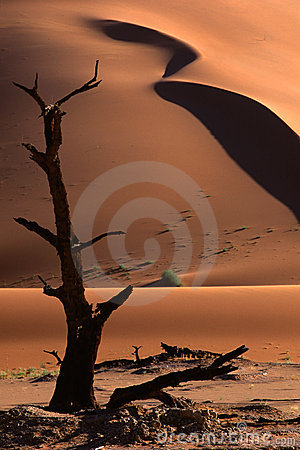 Free Tree And Dune, Sossusvlei, Namibia Stock Images - 1230474