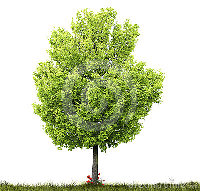 Free Tree And Grass Stock Photography - 24506472