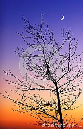 Free Tree And New Moon Royalty Free Stock Photos - 1472878