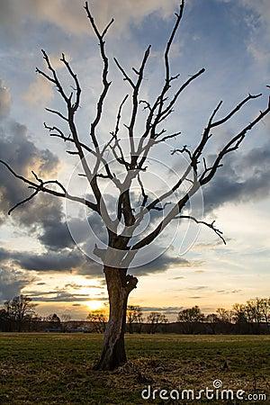 Free Tree At Sundown Stock Photos - 29867893