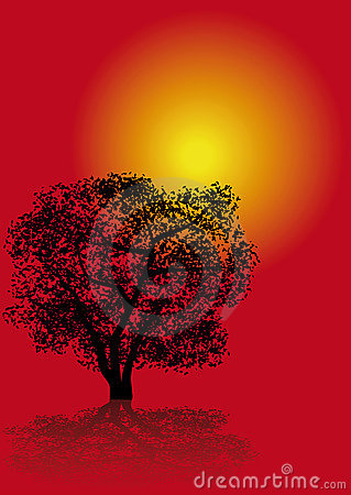 Free Tree At Sundown Stock Photo - 4277970