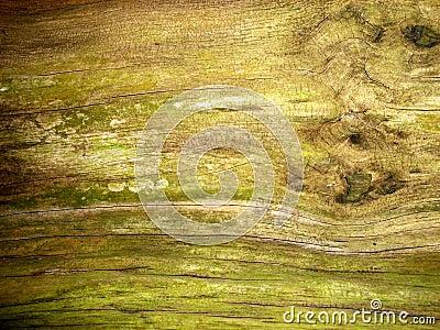 Tree Bark 12
