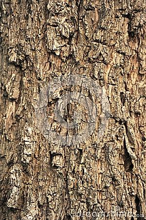 Free Tree Bark Stock Images - 25779524