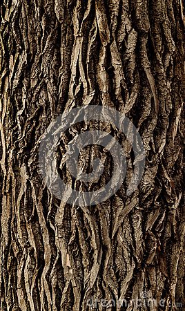 Free Tree Bark Royalty Free Stock Photos - 51508568