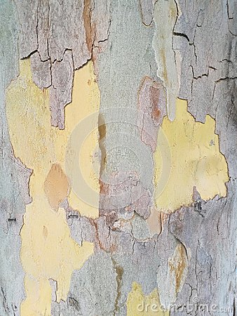 Free Tree Bark Stock Image - 98881501