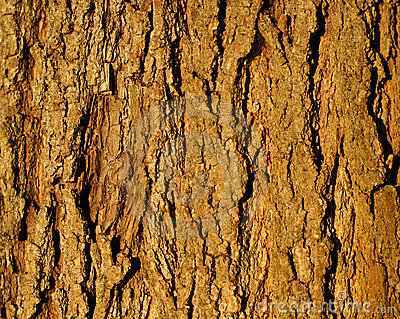 Tree Bark Background Royalty Free Stock Photo - Image: 3010515