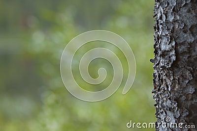 Tree Bark Border