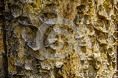 Tree Bark on fence