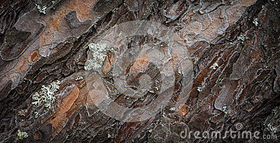 Tree bark with lichen texture