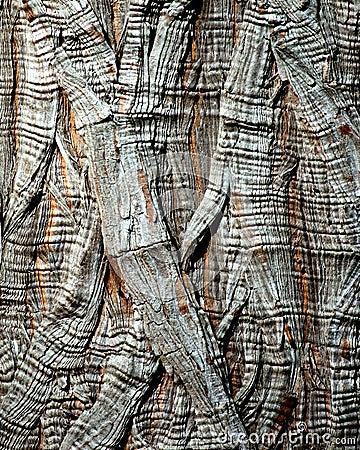 Tree Bark - Montezuma Cypress