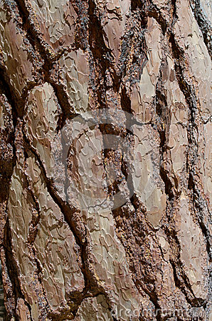 Tree Bark Textures - Free Background Textures