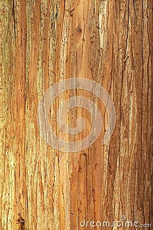 Free Tree Bark Texture Royalty Free Stock Photos - 4375358