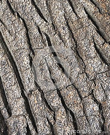 Tree bark texture - detail