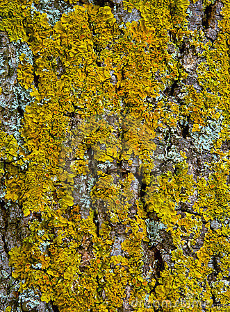 Tree bark texture with moss