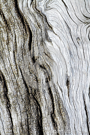 Tree bark texture old