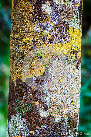 Free Tree Bark With Colourful Moss Stock Photos - 31146143