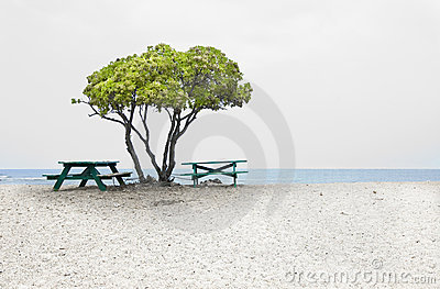 Tree, beach and benches by the seas