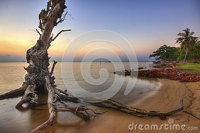 Tree on the Beach at Sunset