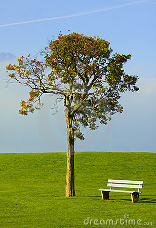 Tree and bench on an ideal lawn
