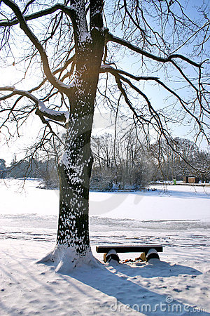 Tree and bench under the snow
