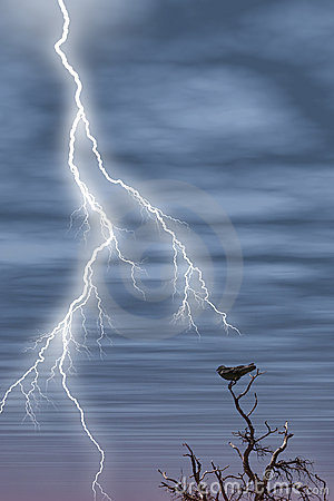 Free Tree Bird Lightning Royalty Free Stock Photos - 140488