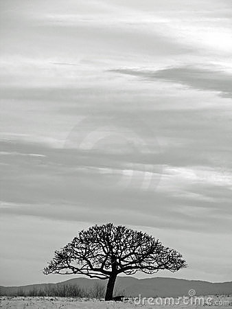 Free Tree Black And White Landscape Stock Images - 2756584