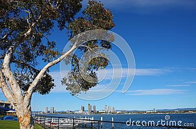 Tree in the blue sky