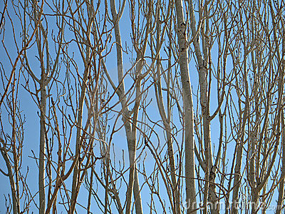 Tree-Branch Patterns